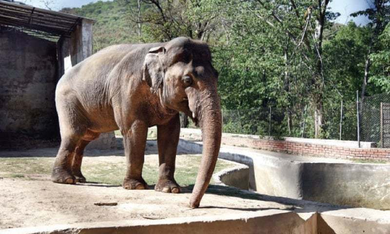 The 33-year-old Asian elephant's case was taken up by animal rights activists across the world because it does not have a partner and has been forced to live in a small enclosure since his partner, Saheli, died in 2012.