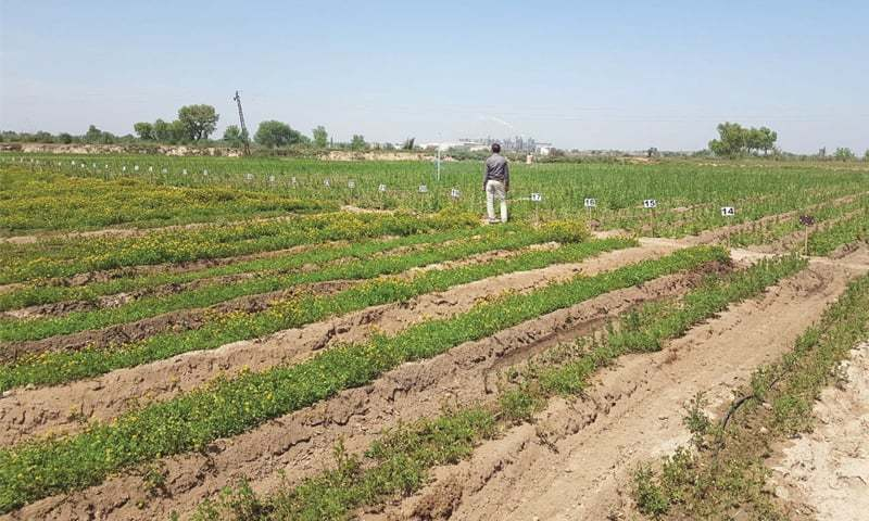 Drip irrigation system installed on 333 acres, says official