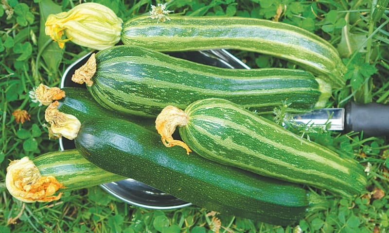 Garden-fresh courgettes | Photos by the writer