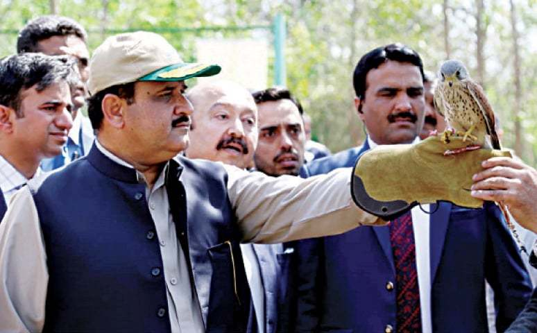 KASUR: Chief Minister Usman Buzdar releases a hawk in Changa Manga to promote wildlife on the World Forest Day. — Dawn