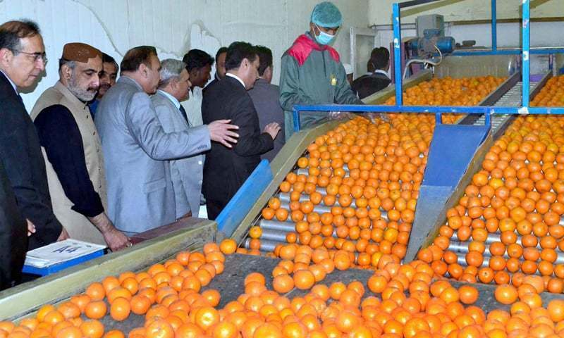 Mobilising local investors for upgrading the horticulture sector is a must. Without this even foreign investment, within or outside the CPEC umbrella, can hardly make a big difference. ─ APP/File