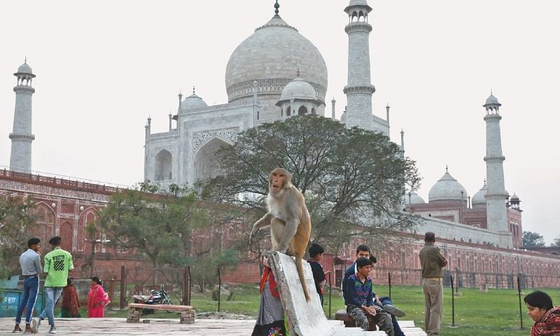Walls, mud packs and monkey removal for Trump in India