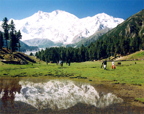 Fairy Meadows below Nanga Parbat. -Photo by author