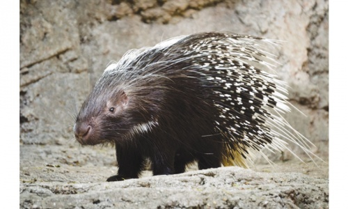 Amazing animals: Defence mechanisms with a difference