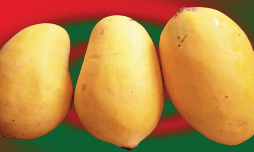 Sindh mango growers worried over contaminated shipments