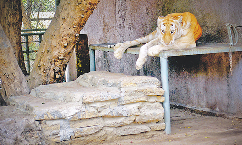 KMC looks for more animals despite poor record