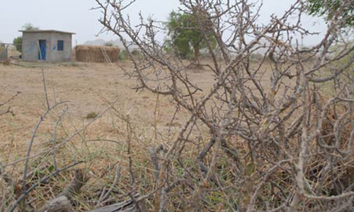 Thar drought situation termed alarming