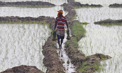 India pitches high agri growth despite poor rains