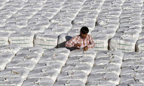 Punjab eyes 10m cotton bales from 5.6m acres