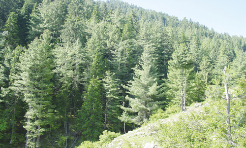 Over 12,000-acre Larkana forest land still under illegal occupation
