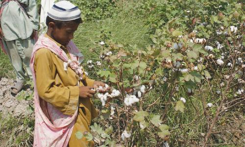 'Paralysed' cotton commissioner