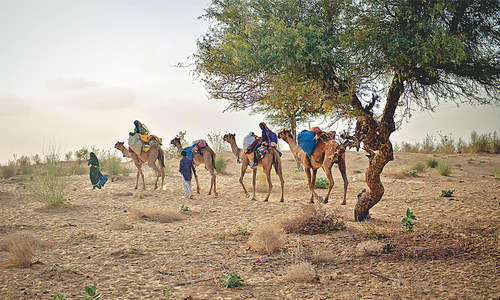 Footprints: Drought Forces 'Mass Migration'