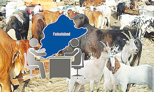 Revamping cattle markets
