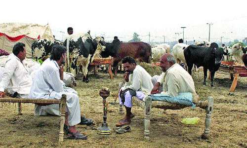 Cattle traders move IHC against high rent in cattle market