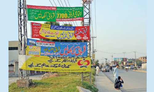 Banners seeking hides go up without administration's permission