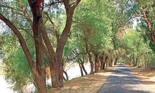 'Planting trees along drains may cut sewage toxicity'