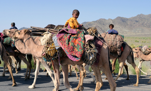 A wandering life: Afghan nomads make Balochistan home