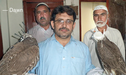 Four precious falcons seized