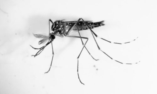 Dengue claims two more lives in city