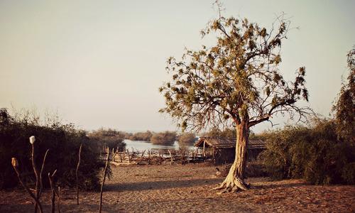 Chotiari Dam: Rare ecosystem that must be protected