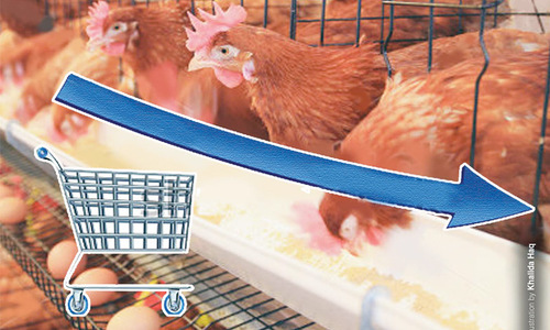 Poultry industry's cyclic crisis
