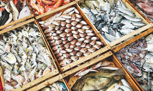 Feeble policy focus on fisheries