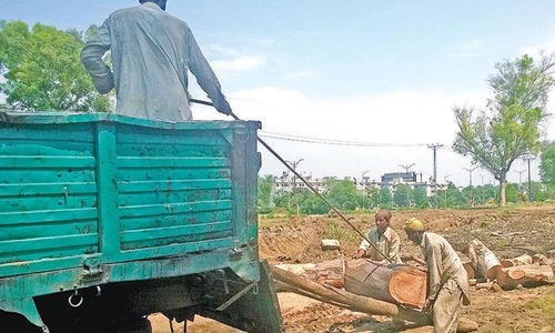 More trees cut for Metro Bus without CDA's approval