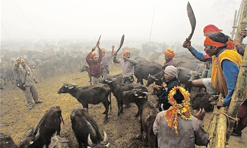 Hindu devotees defy outcry over mass animal slaughter in Nepal