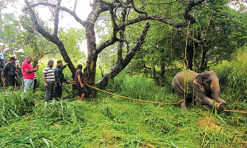 Elephant kills two in Sri Lanka