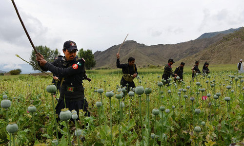 Poppy crops destroyed