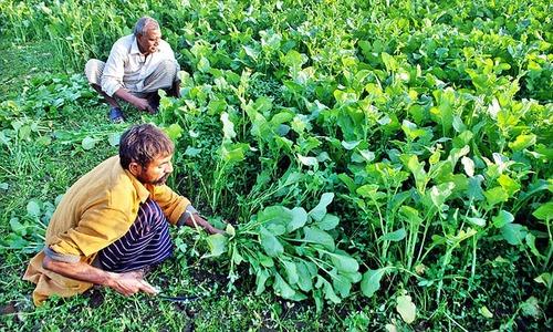 سندھ میں 76 فیصد کاشتکار خاندان بے زمین