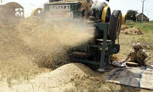 FBR notifies 25pc duty on wheat import