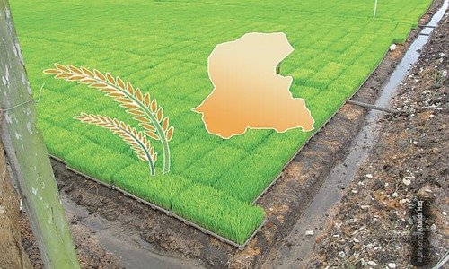 Kharif crops: enabling environment