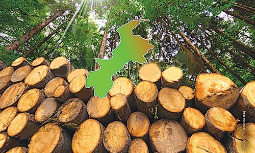 Deforestation a threat to agriculture