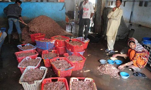 Ministry seeks lifting of EU ban on five seafood exporters