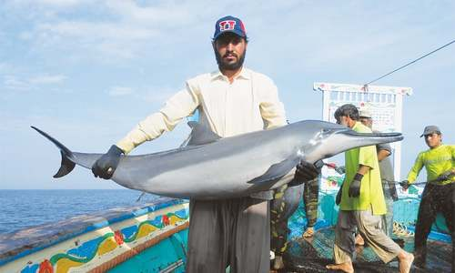 12,000 dolphins killed every year in Pakistan