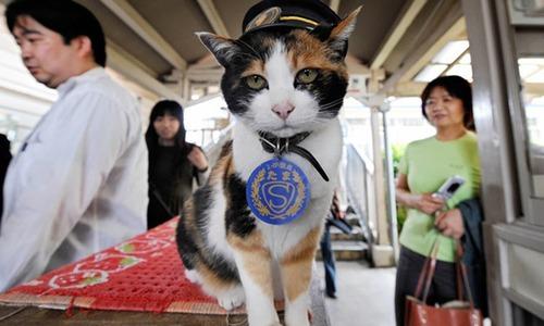 جاپانی 'اسٹیشن ماسٹر' بلی کی آخری رسومات ادا