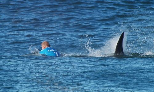 Shock as Aussie surf pro fights off shark attack in South Africa