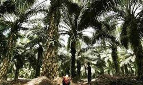 Palm oil up