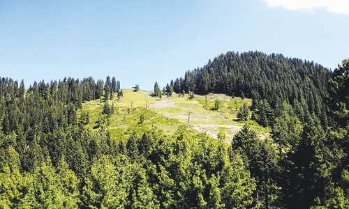 'Forest cover cannot be raised to international standards'