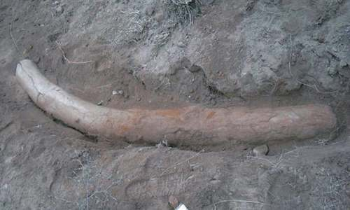 '1.1m years old' elephant tusk found in Gujrat