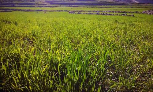 Fata farmers see doom in ban on fertiliser