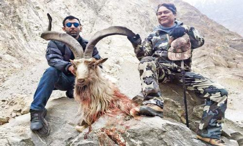 filipino hunts highest rated astore markhor in gb pakistan dawn com. Black Bedroom Furniture Sets. Home Design Ideas