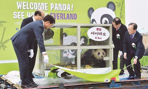 Chinese pandas given by President Xi arrive in South Korea