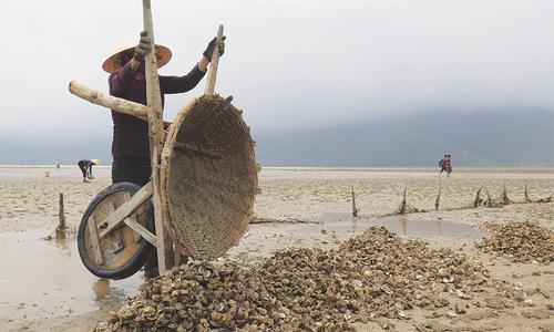 Tonnes of clams die in Vietnam as toxic leak fears mount