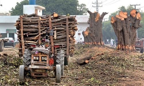 لاہور میں مزید 1700 درخت کاٹنے کی تیاری