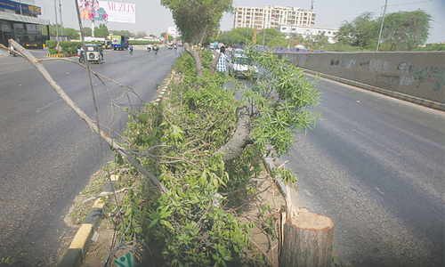 Sindh CM orders probe into tree cutting, arrest of culprits