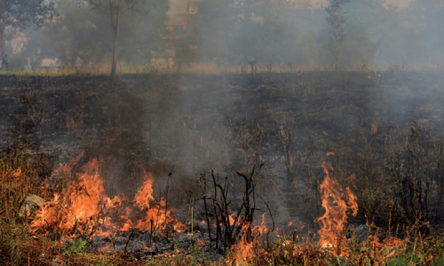 Eight forest fires reported on Margalla Hills in 15 days