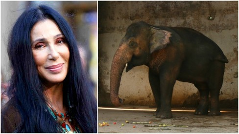 American singer Cher checks up on Kaavan, her adopted elephant in Islamabad