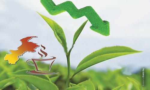 Tea plantation shrinks as promotional efforts falter